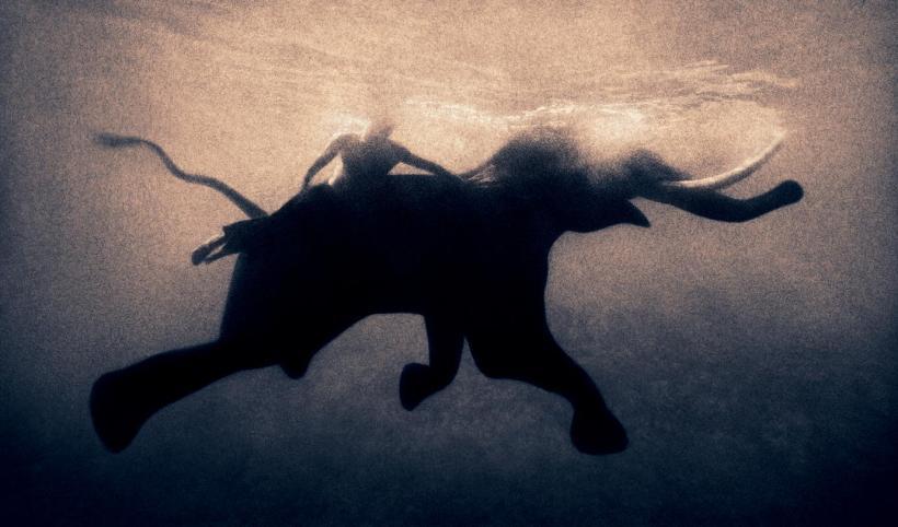 Gregory Colbert Flying elephant