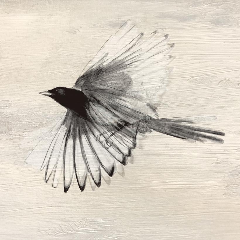 Ekster transparante vleugels.jpg