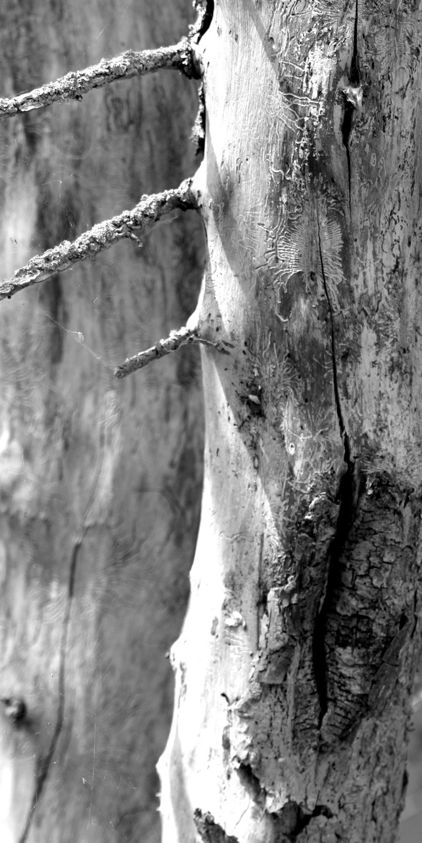 Maja Leie_089 zw ed cut