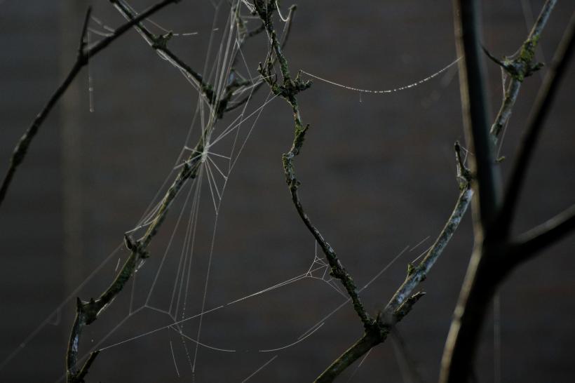 Web_050 ed klein