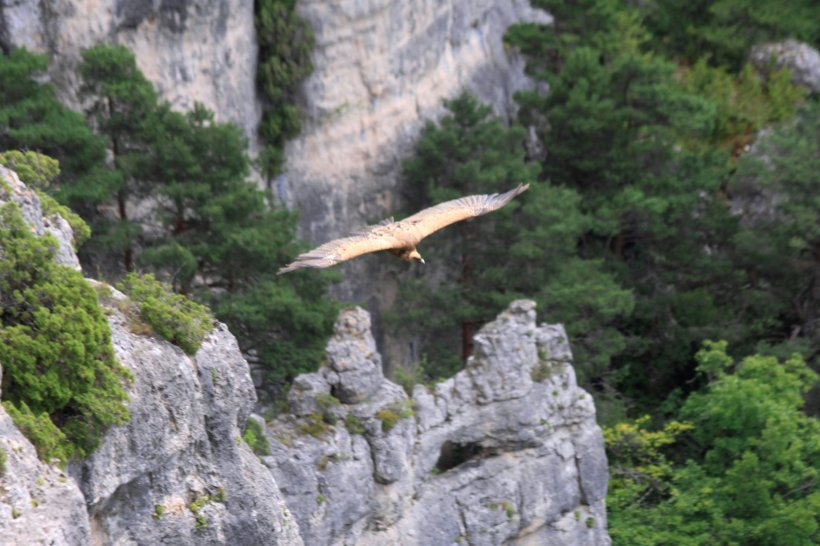 Gorges & Causses 217 ed crop klein