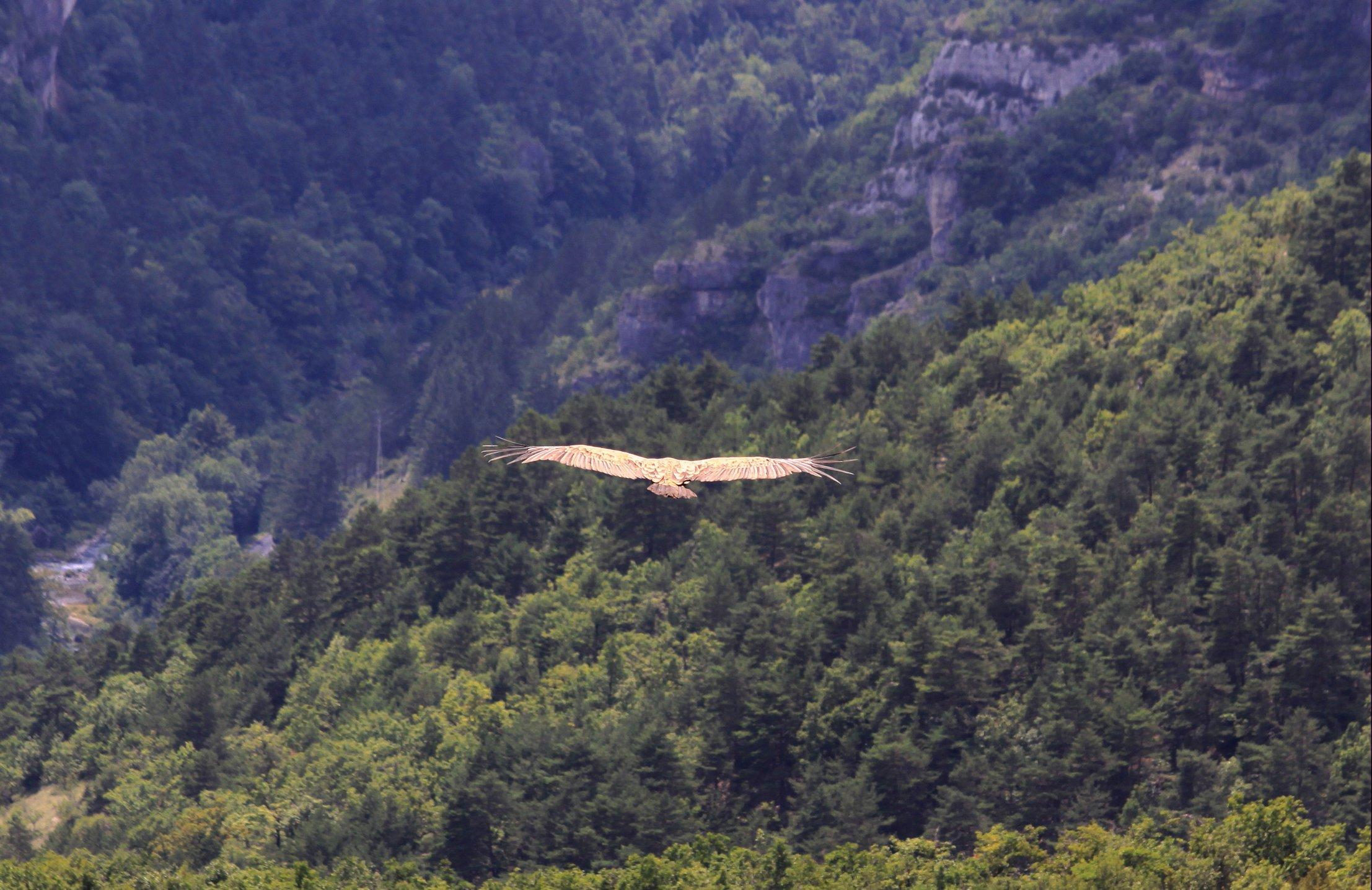 Gorges & Causses 230 ed crop2 klein