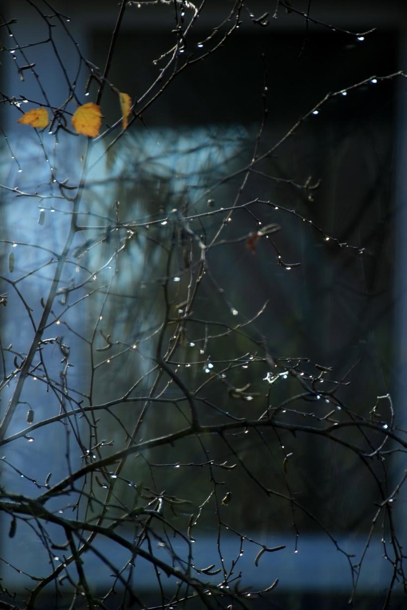 Light & drops_193 klein.jpg