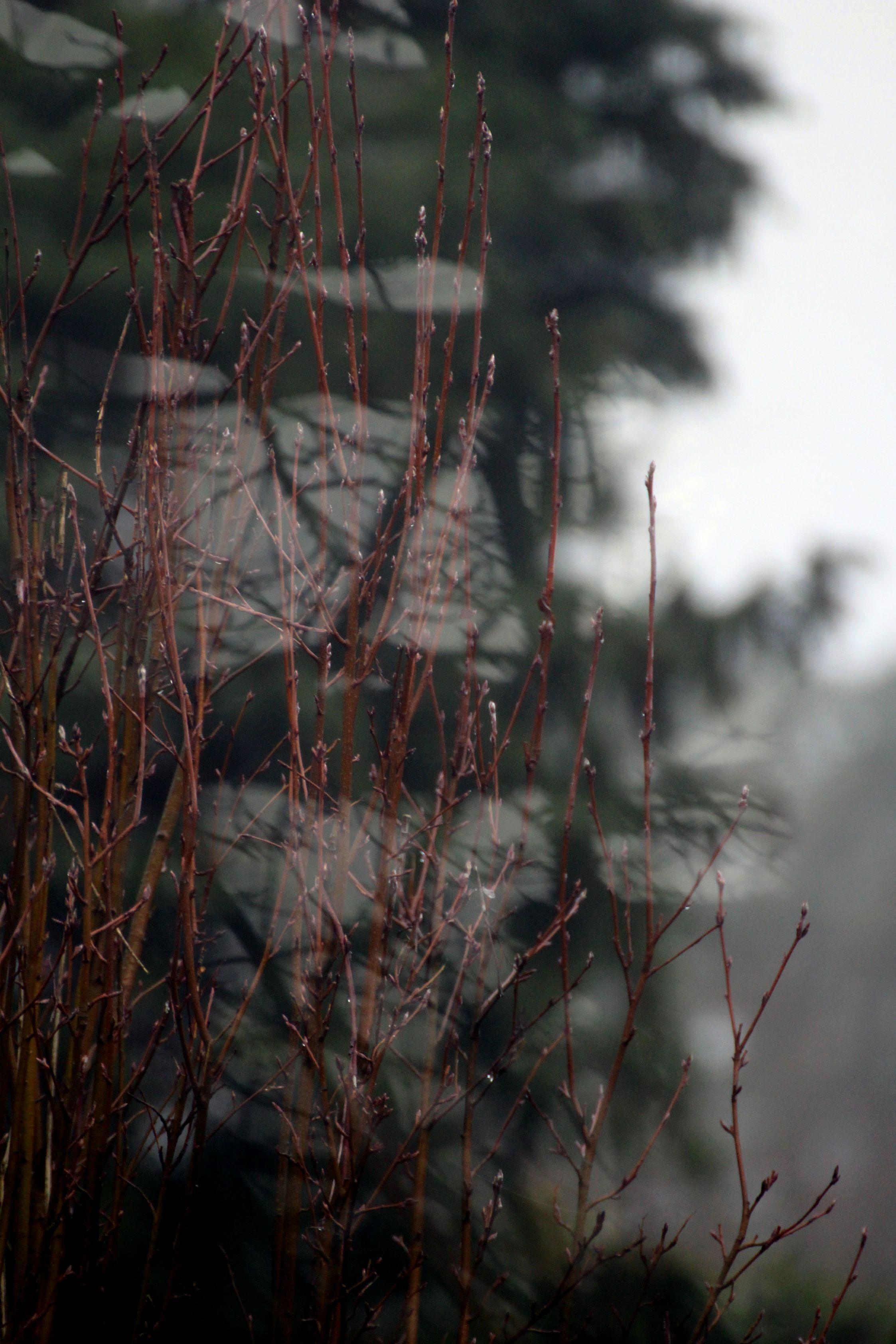 Wintergroen_023 ed klein