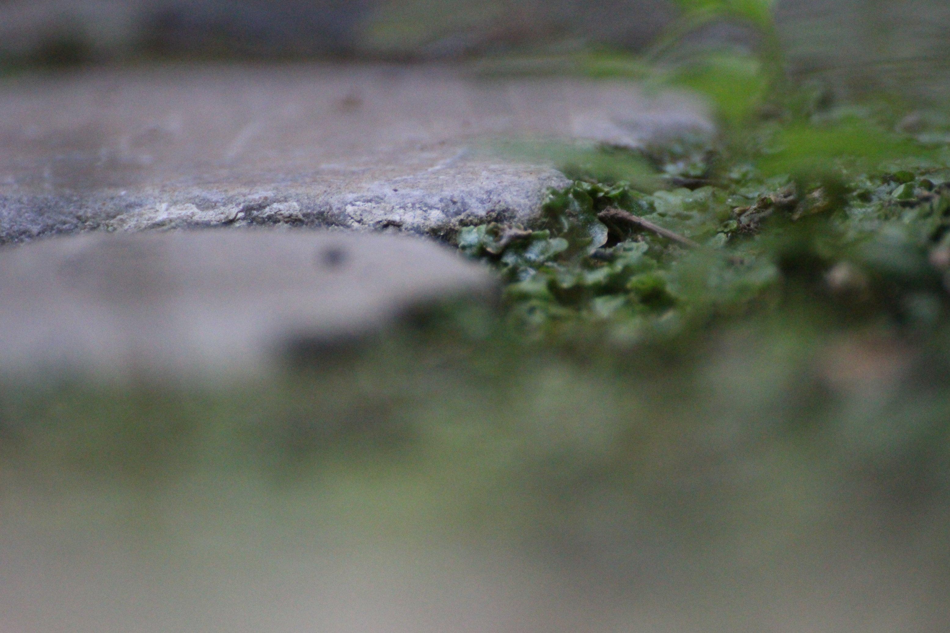 Zomerlijnen BXL_052 klein