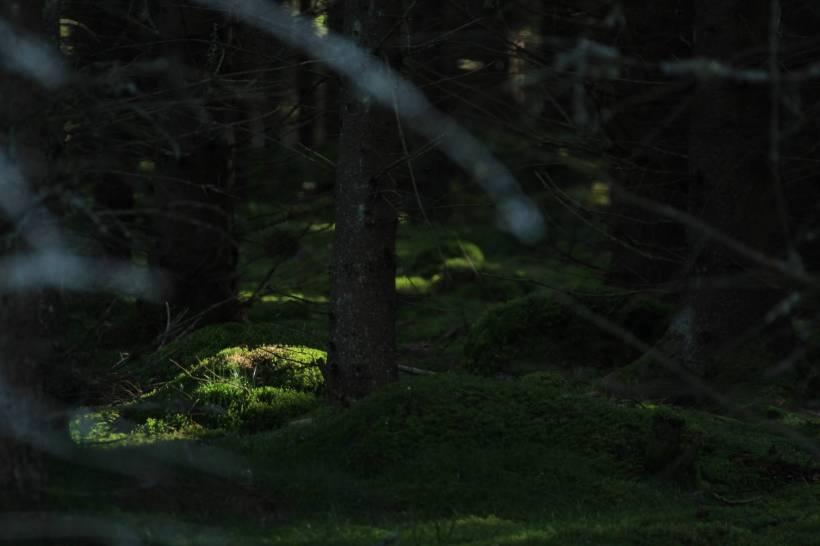 Zweden_329 klein