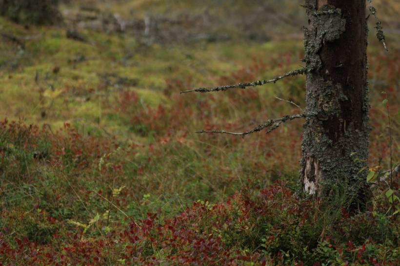 Zweden_541 klein