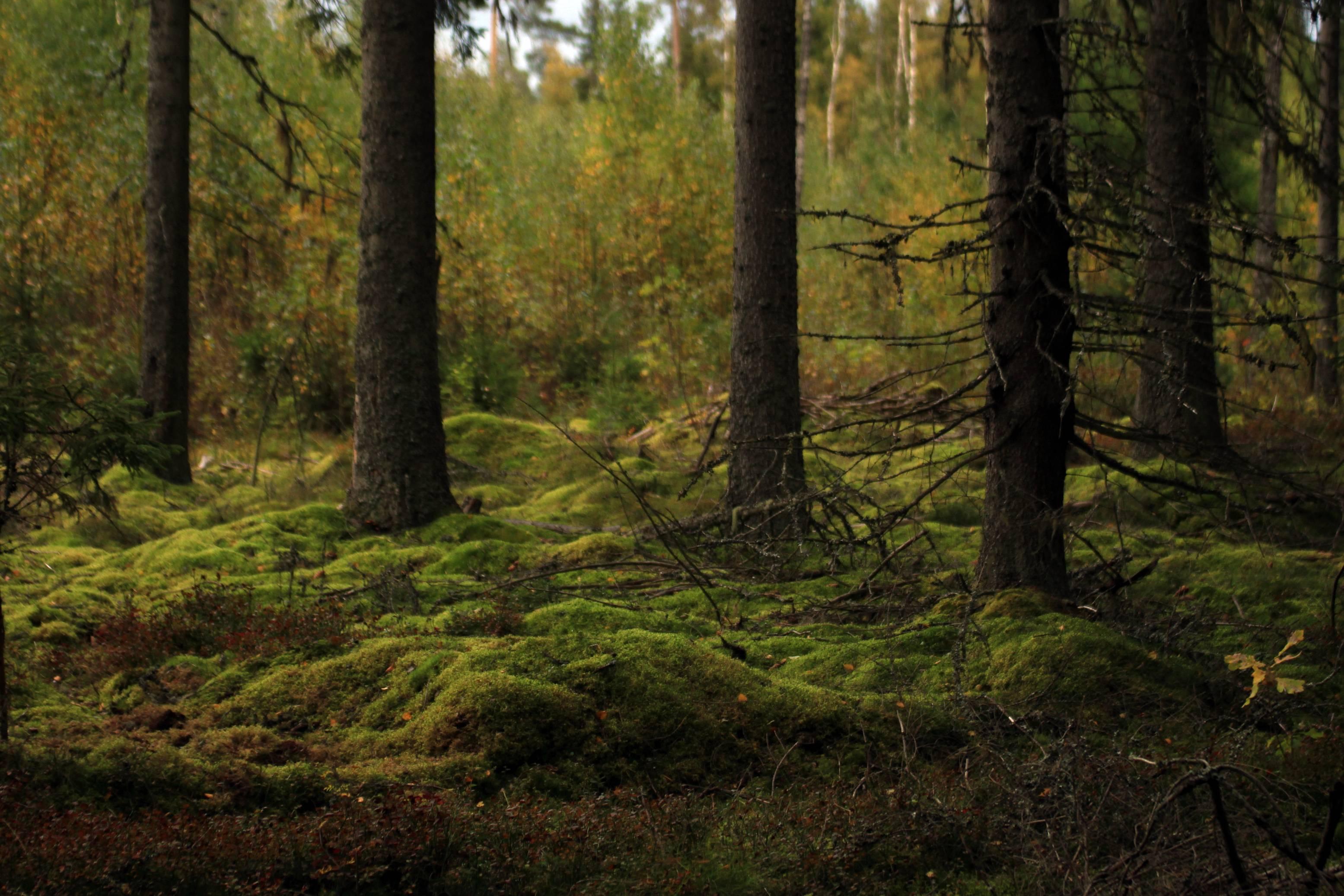 Zweden_801 ed klein